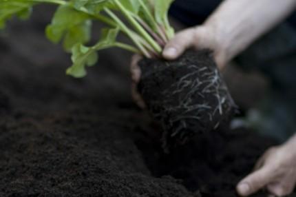 Универсальное садовое удобрение Кеккила 6 кг_02