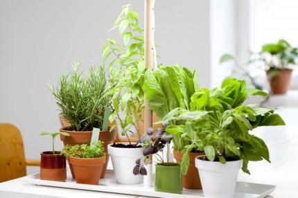 Фитосветильник для досвечивания растений Кеккила_02