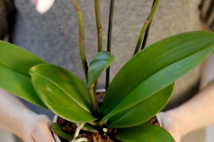 Грунт для орхидей Кеккила 6л_01