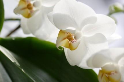 Грунт для орхидей Кеккила 6л_02
