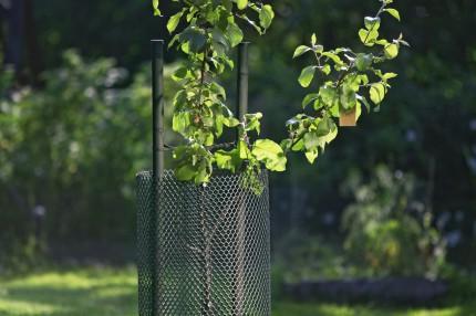 Защита молодых деревьев Кеккила_03