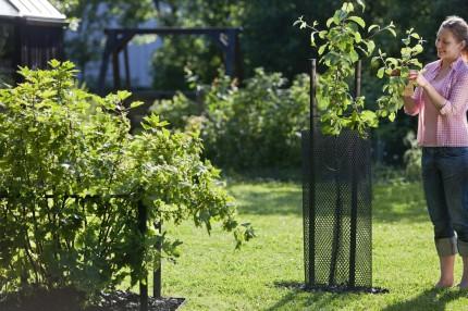 Защита молодых деревьев Кеккила_08